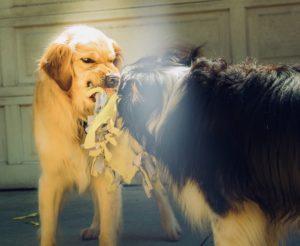 狂犬病のイメージ