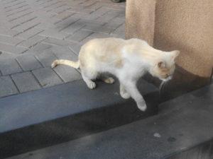 ケネディー公園の猫