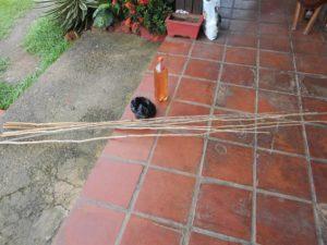 ピラニア釣りの竿
