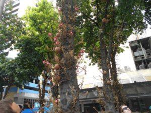 ブラジルの有名な植物