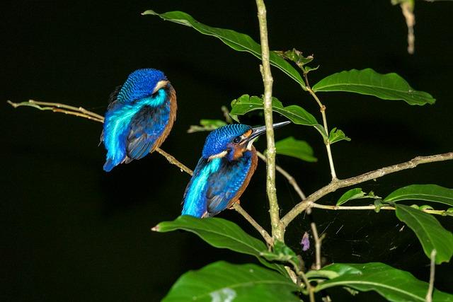 キナバル自然公園の鳥