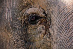 悲しそうなゾウの目