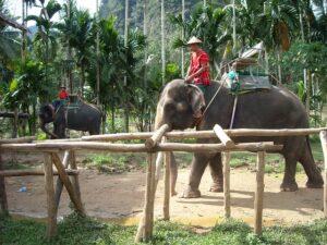 観光客を乗せる座席を背負ったゾウ