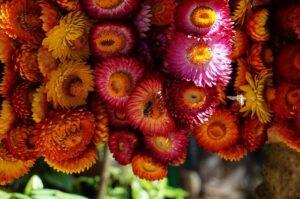 バギオの花