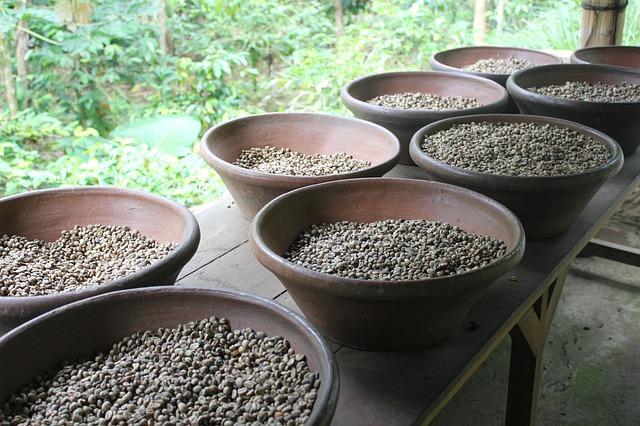 ジャコウネコの糞から作るコーヒー