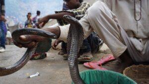 アーグラの蛇