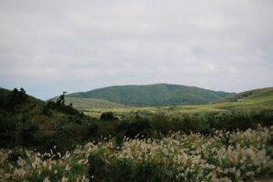 陽明山国家公園のすすきの