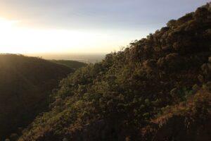 モリアルタ保護公園