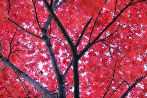 オリンピック公園の紅葉